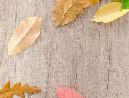 Les 10 choses que j'aime le plus en novembre