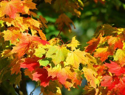 5 conseils pour bien préparer l'automne