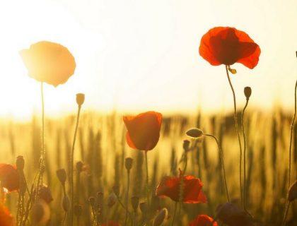Chaleur estivale en octobre : 6 conseils pour bien en profiter
