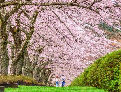 6 idées pour accueillir le printemps